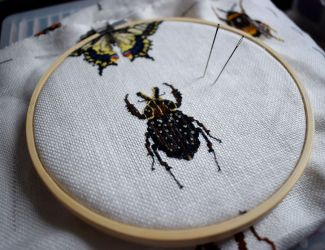Bugs Progress February 16