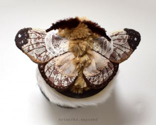 Lace Moth 1