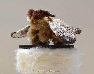 Lace Moth 2